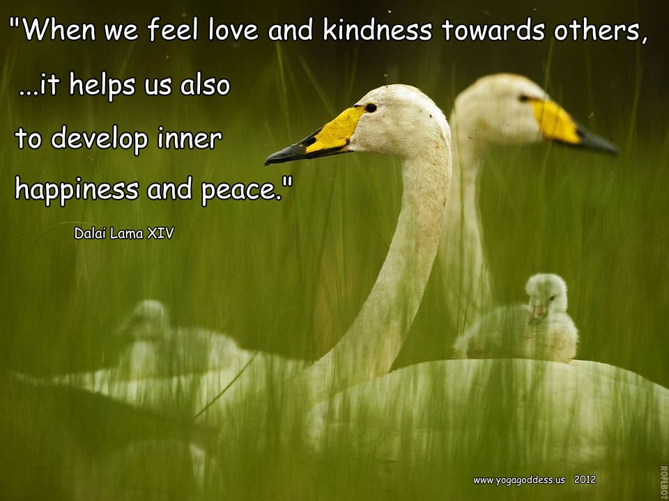 Loving Kindness Quotes Magnificent Metta Lovingkindness The Practice Of Universal Love