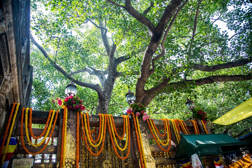 A photo I took while sitting under the Bodhi tree in Bodhgaya