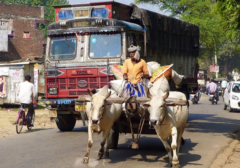 All modes of transport can be found on Indian roads © Ulrich Luft